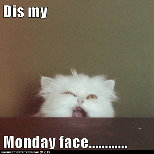 animals best of the week cat Hall of Fame I Can Has Cheezburger i hate mondays monday monday face snarl - 5734442752