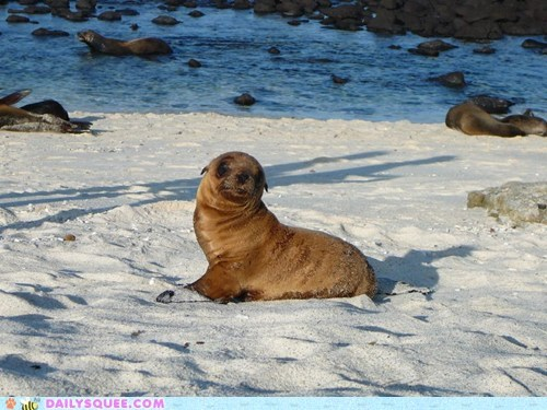 baby camera pose posing pup sea lion squee spree - 5734555904