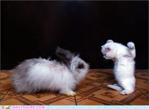 arguing,Babies,baby,bunny,cat,comparison,fighting,fluffier,Fluffy,friends,friendship,Hall of Fame,Interspecies Love,kitten,rabbit