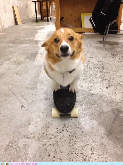 acting like animals corgi Hall of Fame skateboard song - 5734702592