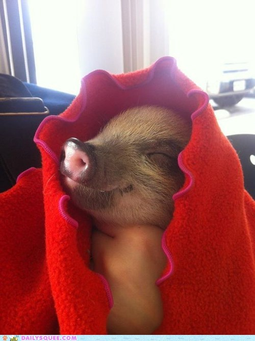 baby blanket Hall of Fame happy literalism pig piglet pigs in a blanket pun sleeping - 5734737408