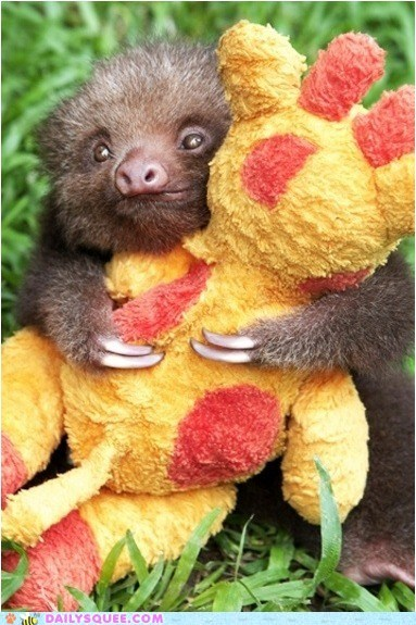 baby,better,comparison,cuddling,friend,Hall of Fame,sloth,stuffed animal,you win