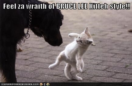 bruce lee,cat,dogs