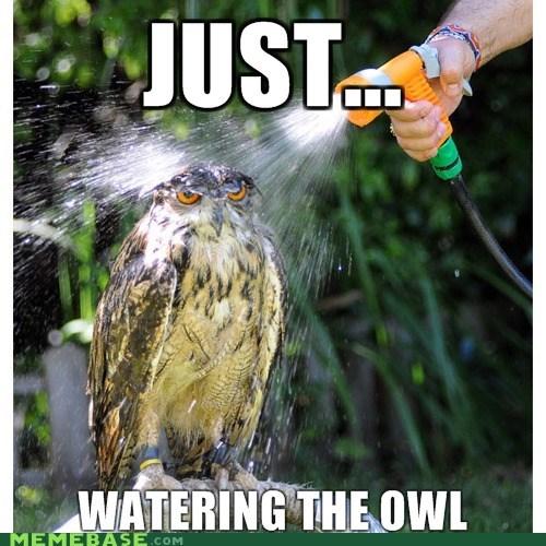 hose Memes Owl watering - 5735092224
