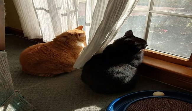 cats looking out of windows