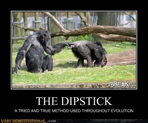 dipstick hilarious monkeys wtf - 5735643648