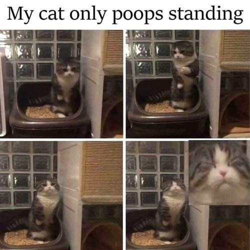 funny memes Memes animal memes Cats cat memes - 5736197