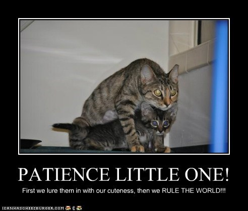 caption,captioned,cat,Cats,cuteness,first,kitten,little,lure,next,patience,plan,rule,then,world,world domination