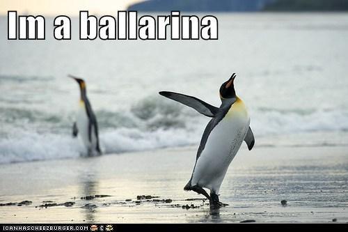 animals ballerina best of the week bird Hall of Fame penguin - 5736735744