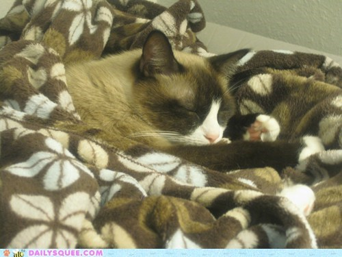 asleep blanket blending in camouflage cat colors reader squees sleeping - 5736830720