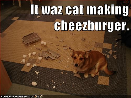 Cheezburger Image 5736857600