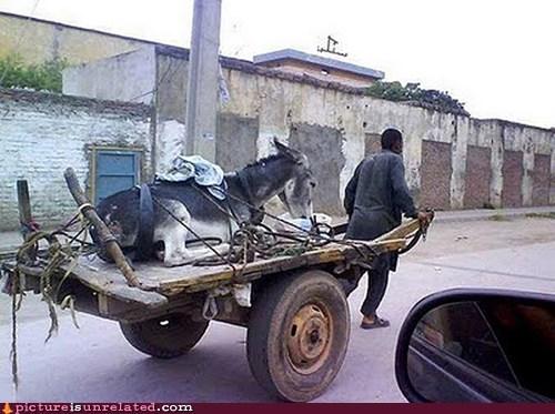backwards cart donkey mule wtf