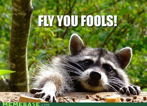 gandalf Lord of the Rings Memes raccoon - 5737108480