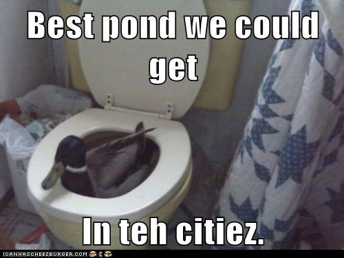 best caption captioned could duck makeshift pond pragmatism toilet we - 5737217792