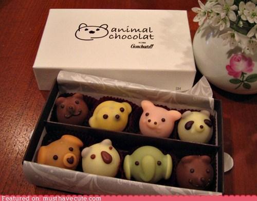 animals chocolate epicute menagerie truffls - 5737460480