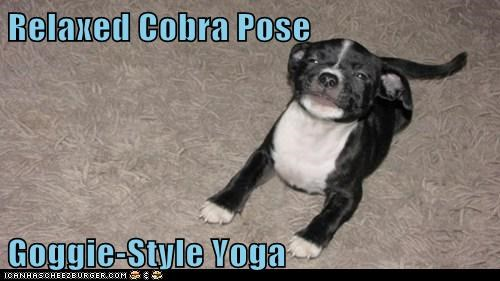 Relaxed Cobra Pose Goggie-Style Yoga