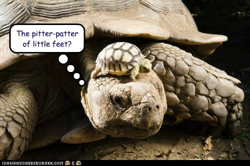 kids,raising,funny,turtles,pitter-patter