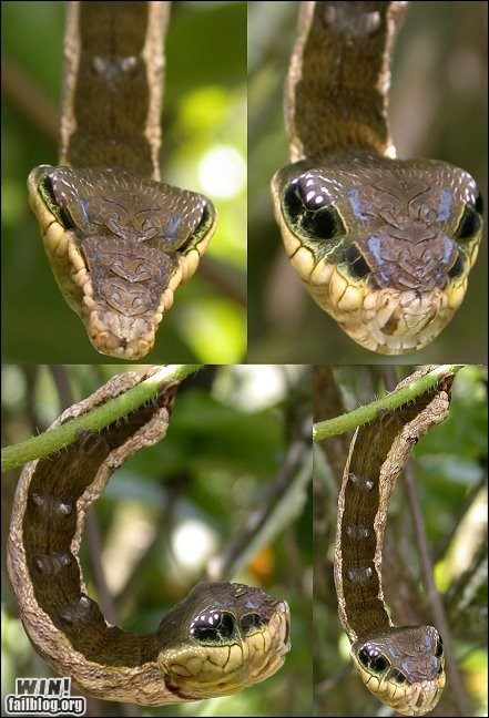 animals camouflage caterpillar disguise insects mother nature ftw snake - 5738312704