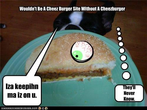 Cheezburger Image 5738390528