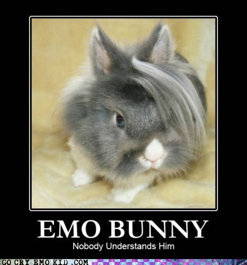 animals best of week bunny emolulz