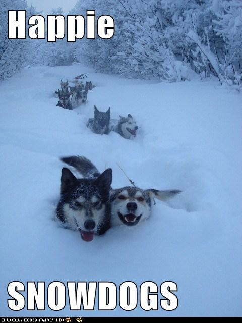 awesome happy dog happy dogs huskies husky outdoors snow snow dogs winter - 5738443520