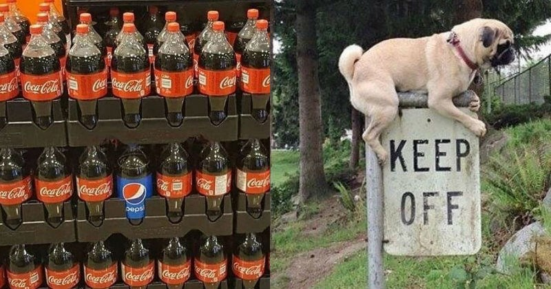 rule breaking dogs first world anarchists rebels stealing pepsi madlads signs clever peanut butter dumb video games juice funny - 5738501