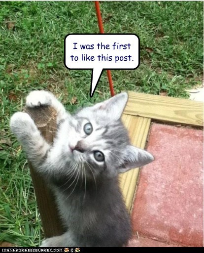 best of the week caption captioned cat double meaning facebook first Hall of Fame kitten like post pun was - 5738880768