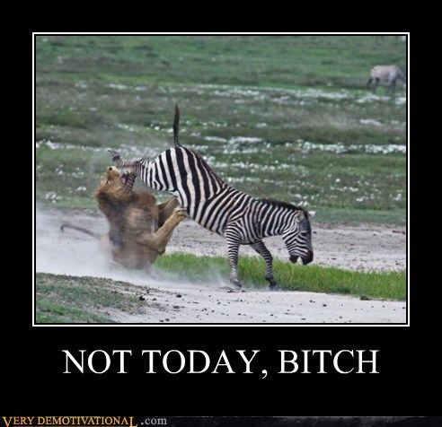 animals,hilarious,lion,not today,wtf,zebra