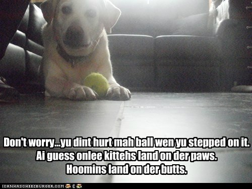 are-you-hurt-butt are you ok ball best of the week fall down fell down Hall of Fame labrador retriever oops ouch tennis ball thats-a-bummer-man - 5738992640