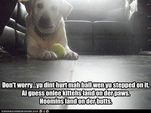 ball best of the week fall down Hall of Fame labrador retriever oops ouch tennis ball thats-a-bummer-man - 5738992640