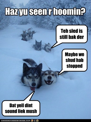 Haz yu seen r hoomin? Teh sled is still bak der Maybe we shud hab stopped Dat yell dint sound liek mush