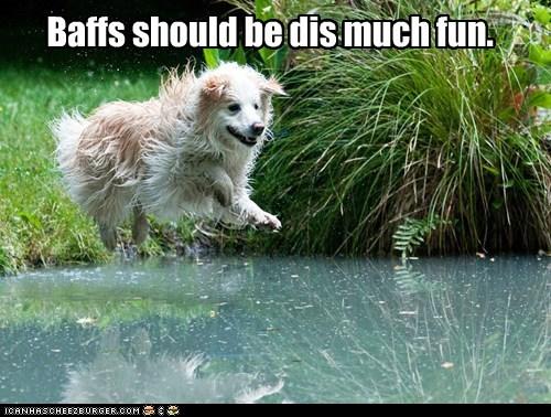 bath bath time fun golden retriever having fun jump lake water - 5739062016
