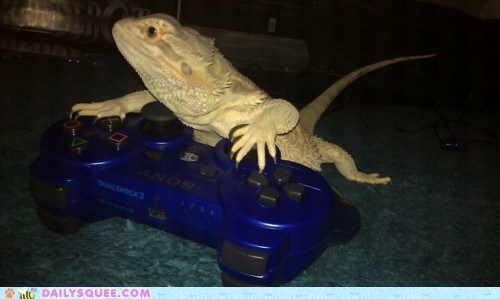 acting like animals dark souls gaming Hall of Fame lizard playing playstation video games - 5739072512