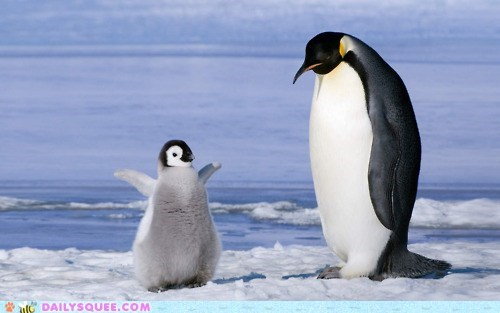 baby celebrating chick cute exclamation exclamatory Hall of Fame happy look mom mom parent penguin penguins posing - 5739098368