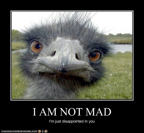 animals birds emu im-not-mad just disappointed - 5739265536