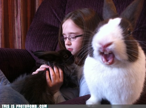 angry animal Animal Bomb best of week children fuuuuuu pets rabbit - 5739303168