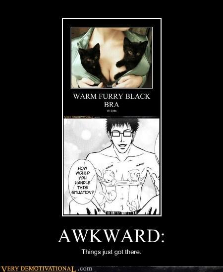 wtf Awkward bewbs Cats - 5740079616