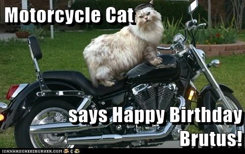 Motorcycle Cat Says Happy Birthday Brutus