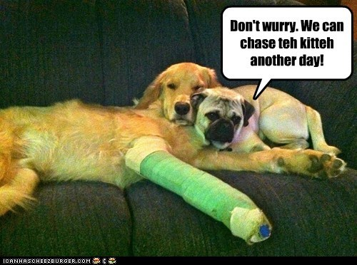 broken leg cast friends friends forever golden retriever i love you im here for you pug