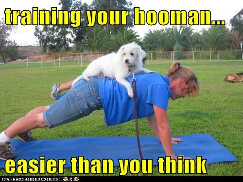 exercise fitness human training mixed breed personal trainer push up training your human whatbreed