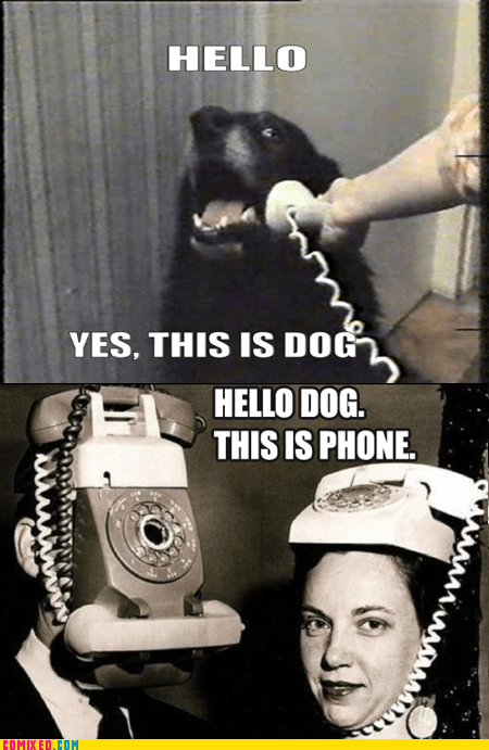 hello meme ring ring the internets the phones this is dog - 5740896000