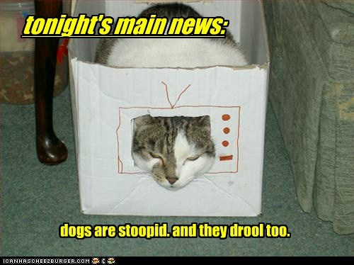 box,caption,captioned,cat,dogs,drool,news,stupid,television