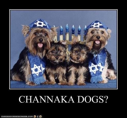 Cheezburger Image 5741502464