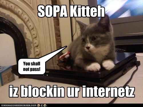 computer cat memes - 5741705728