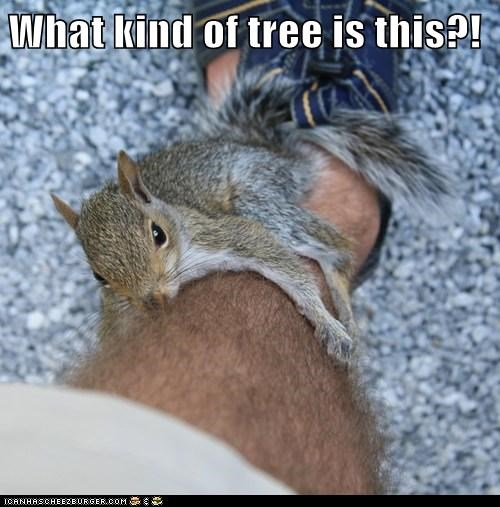 animals,confused,human,leg,squirrel,tree,what
