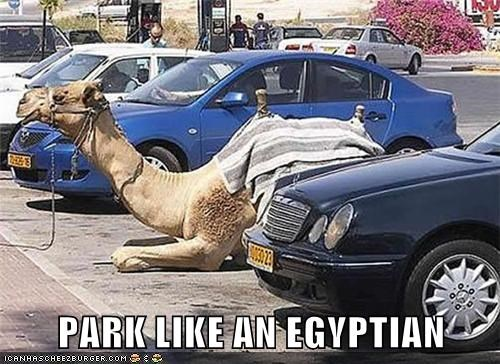 animals camel egypt park parked parking - 5741786112