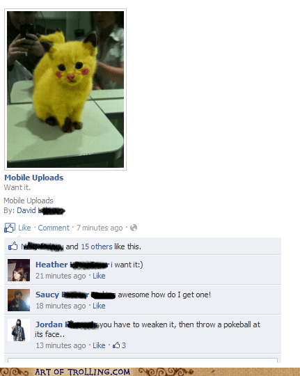 cat facebook pikachu Pokémon - 5742136576
