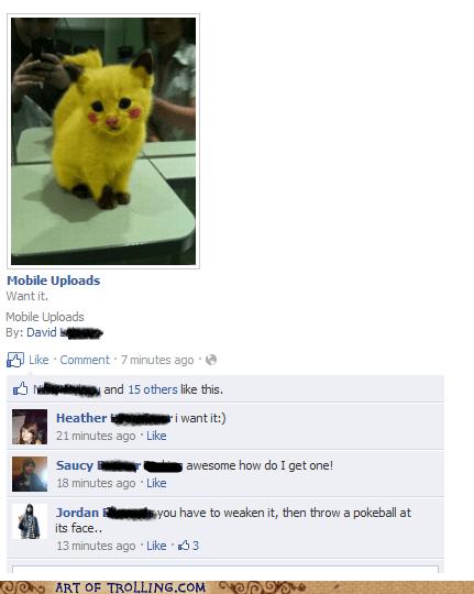 cat facebook pikachu Pokémon - 5742136576