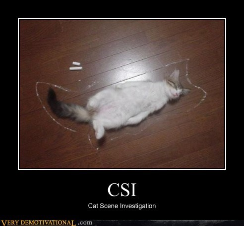 cat chalk csi dead hilarious mark - 5742154240