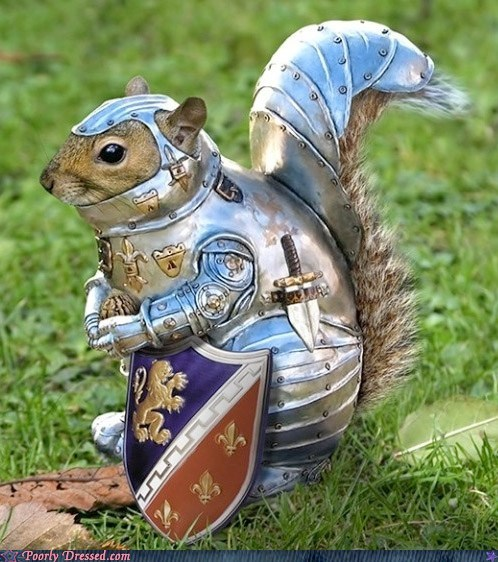 animals rodents squirrel armor squirrels - 5742226176
